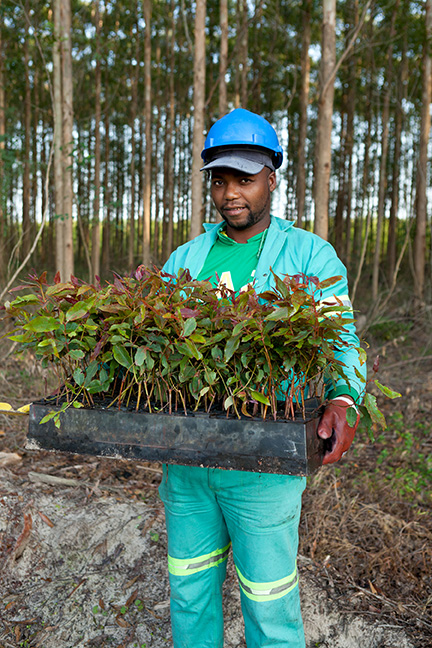 Renewability-is-at-the-heart-of-South-Africa-Forestry-credit-Sappi
